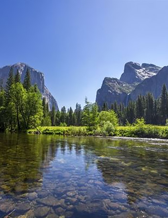 Yosemite National Park | Yosemite,CA | Apple Blossom