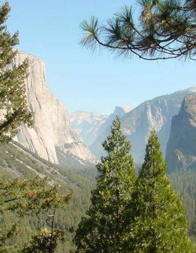 Yosemite Vlley   Yosemite,CA   Apple Blossom